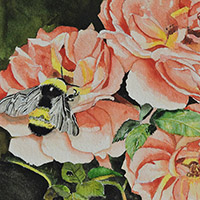 Watercolour - Bees on Roses - $300.00